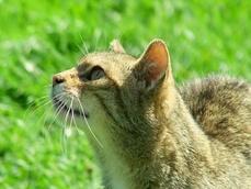 chat seine et marne